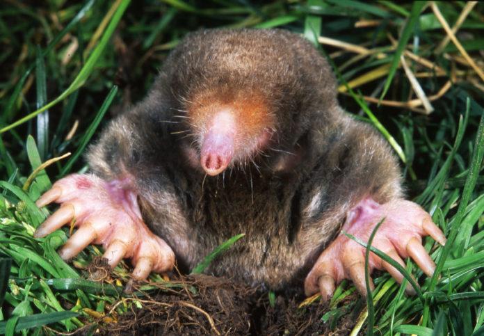 Matching Mole